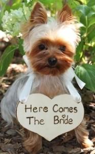 Bouquet Of Brides